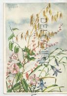 Marianne Schneegans: Ackerwinde (liseron) Petit Lizet, Corn-bind - Fleurs