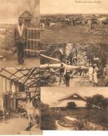 Congo Belge : 15 Cp ----- 15 Kaarten 159-160-161 - Autres
