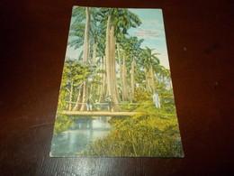 B705   Cuba Avana Cm14x9 - Cartoline