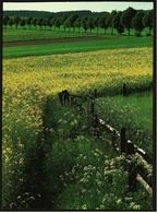 Landschaft Im Arnsberger Wald  -  DJH / Deutsche Jugend Herberge  -  Ansichtskarte Ca. 1987    (9425) - Möhnetalsperre