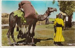 5-THE DESERT TRANSPORT IN IRAQ(CAMMELLO) - Iraq