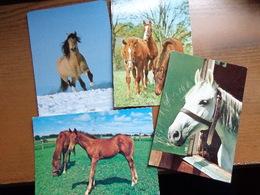 Paard, Cheval, Horse / 28 Kaarten (zie Foto's) - Horses