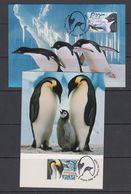 AAT 2000 Penguins 2v 2 Maxicards (41544) - Maximumkaarten