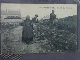 29 PORSPODER RECOLTE DU GOEMON - France