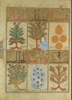 Traité De La Thériaque (1199) - Cartes Postales