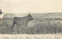 """CPA FRANCE 13 """"En Camargue, Manade De L'Amarée Lou Bramairo"""" / TAUREAU - Autres Communes"""