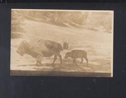 USA PPC Bison - Tierwelt & Fauna