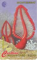 TARJETA DE MONTSERRAT DE UN FLOWERS OF THE SEA  10CMTB - Montserrat