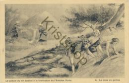 La Culture Du Riz Destiné à La Fabrication De L'Amidon Ramy - La Mise En Gerbes [AA21-0.944 - Malerei & Gemälde