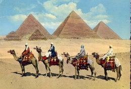 Camel Caravan Near Mgiza Pyramids - Formato Grande Viaggiata – E 9 - Pyramids