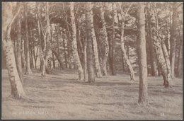In Norton Cover, C.1910s - CB RP Postcard - To Identify