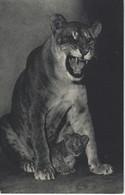 PARC ZOOLOGIQUE DU BOIS DE VINCENNES - PARIS - UNE LIONNE Et Son PETIT - Lions