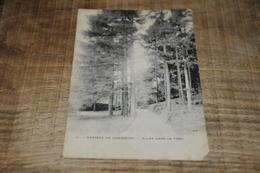 6878-   CHATEAU DE MARIEMONT, ALLEE DANS LE PARC - 1911 - Jalhay