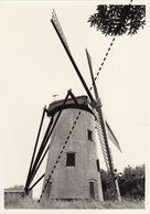 Photo Originale Moulin Molen à Oostkerke - Orte