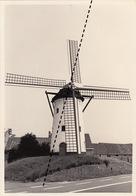 Photo Originale Moulin Molen à Hoeke Damme - Orte