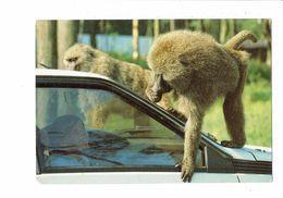 Cpm - PARC DE SAINT-VRAIN - Monde Des Animaux Sauvages - Safari Auto - Singe - - Monkeys