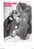 Cpm - Singe Chimpanzé - Humour ENSEMBLE POUR TOUJOURS - Mère Allaite Bébé - Singes