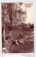 87  Environs De COMPREIGNAC Les Bons Pacages En Limousin ( Moutons ) CPA Ed Boissin - Non Classés