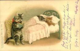 1900, KAtzen, Cats, Chats, From St. Gallen Switzerland - Gatos