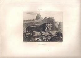 """Gravure Par Courtry -E. Delacroix. """"Lion Attaqué"""" -imp. A. Salmon - Engravings"""