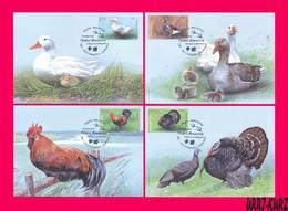 MOLDOVA 2018 Nature Fauna Birds Farm Domestic Poultry Goose Duck Rooster Turkey Gobbler 4 Maxicards Maximum Cards - Moldova