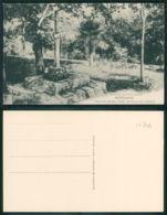 OF [17744 ] - ESPAÑA - MONDARIZ - FINCA DE SAMIL (PIAS) DETALLE DEL PARQUE - Espagne