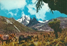 Mount Kenia (Kenia) Panorama Con Cavalli, General View With Horses - Kenia