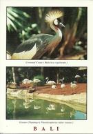 Bali (Indonesia) Crowned Crane (Balerica Regulorum), Greater Flamingo (Phoenicopterus Ruber Roseus) - Indonesia