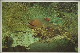 Maldives ... The Diver's Paradise - Morey Eel With The Young - Photo Rannali Tourist Village - Maldives