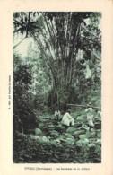 MARTINIQUE Antilles - TIVOLI : Les Bambous De La Rivière - CPA - Caribbean Caraïbes Tree Arbre Bome Boom Albero árbol - Non Classés