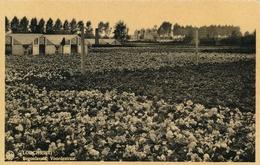 LOCHRISTI - Begoniaveld, Voordestraat - Lochristi