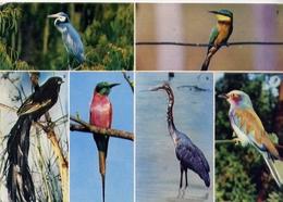 African Birds - Black Headed Heron - Formato Grande Viaggiata Mancante Di Affrancatura – E 9 - Cartoline