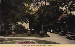 Illinois Peoria Grape Vine Walk In Glen Oak Park - Peoria