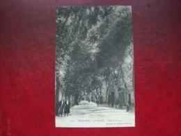Carte Postale Ancienne De Belle-Ile-en-Mer: Le Palais - Avenue Carnot - Belle Ile En Mer