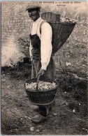 45 - En Gatinais, La Récolte Du Safran, Safrinier - Frankrijk