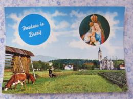 Slovenia - Unused Postcard - Brezje - Church - Virgin And Child - Farm - Cows - Slovénie