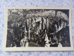 Slovenia - Unused Postcard - Postojna Cave - Slovénie