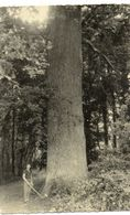 - VALLIERES (89) - Le Chêne Séculaire Et Le Bûcheron (impressionnant!) -10456- - Francia