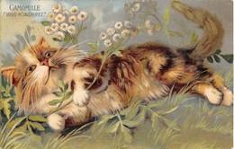 2 CP CHATS Et Emblèmes Fleurs: Camomille Et Marguerite. Très Belles Illustrations Non Signées. 1905 Et 1906 - Chats
