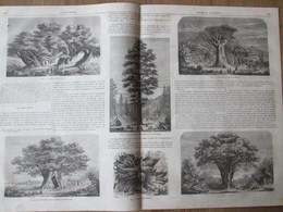 Gravure 1864  Arbres Géants GIANT TREES Baobab Dragonnier Teneriffe  Wellingtonia Chataignier Etna  Platane Bujukdéré - Vieux Papiers