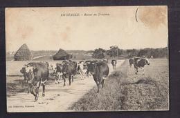 CPA 28 - EN BEAUCE - Retour Du Troupeau - TB PLAN Vaches Sur Le Chemin - France