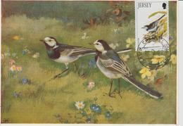 Jersey Carte Maximum Oiseaux 1992 Oiseaux De L'hiver 557 - Jersey