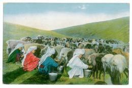 KYR 1 - 8804 KYRGYSZEN Ethnic Women, Milking Goats - Old Postcard - Unused - Kirghizistan