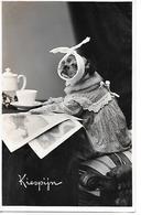 Pug, Carlin, Mops, Toothache, Dentistry, Mal Aux Dents, Zahnschmerzen, Dresses Dog, Chien, Hund - Perros