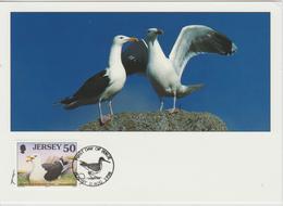Jersey Carte Maximum Oiseaux 1998 Goéland 843 - Jersey