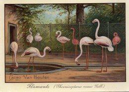 ¤ Chromo Cacao Van Houten - Flamants Roses - Van Houten