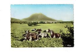 Cpm - PUY DE DOME - Méditation - Vaches Au Pré - Vache - Cim 631728 - 1964 - Cows