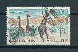 1955 Kameroen Animals,fauna,dieren,tiere,giraffe Used/gebruikt/oblitere - Kameroen (1915-1959)