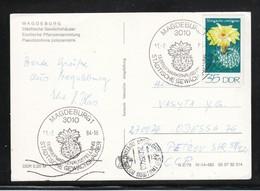 DDR 1984, PK  Gewächshäuser Magdeburg, Kaktus / GDR 1984, Postcard Greenhouses Magdeburg, Cactus - Sukkulenten