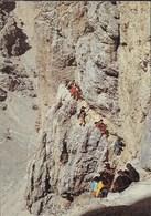 DOLOMITI - VIA FERRATA CATINACCIO D'ANTERMOIA - NUOVA - Alpinisme